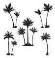 tropical palm trees black silhouettes vector image