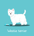 westie terrier dog with bone on sky blue vector image
