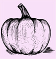 pumpkin doodle style vector image
