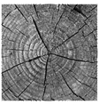 natural of engraving saw cut tree trunk abstract vector image