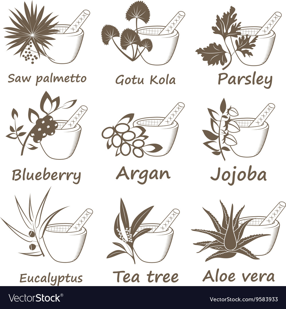 Collection of ayurvedic herbs vector