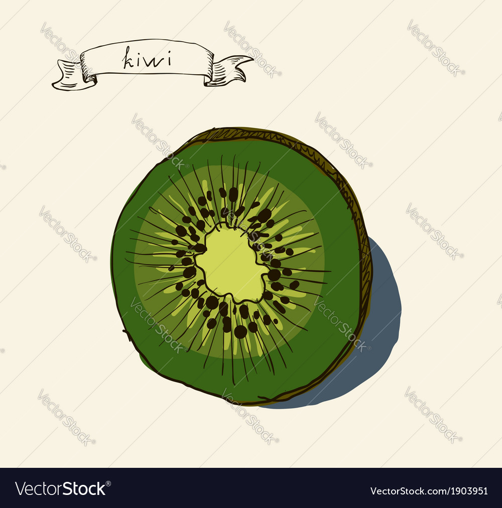 Artistic kiwi fruit vector
