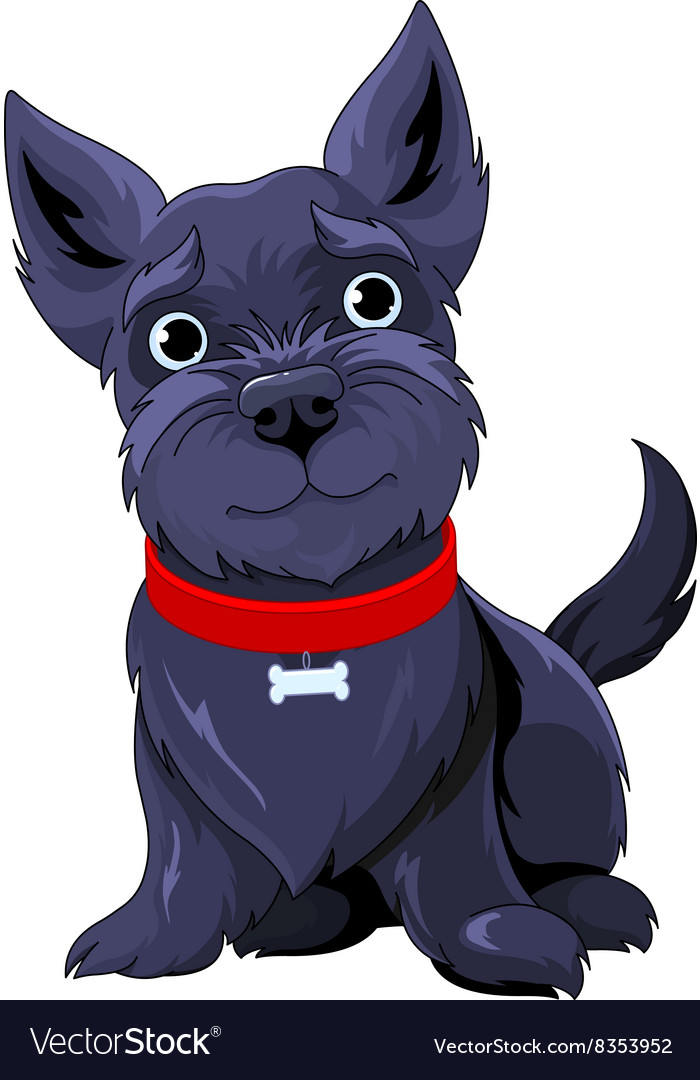 Scotch terrier vector