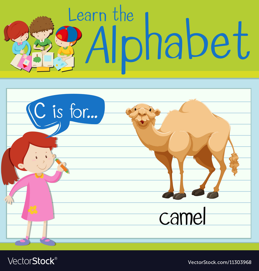 Flashcard letter c is for camel vector