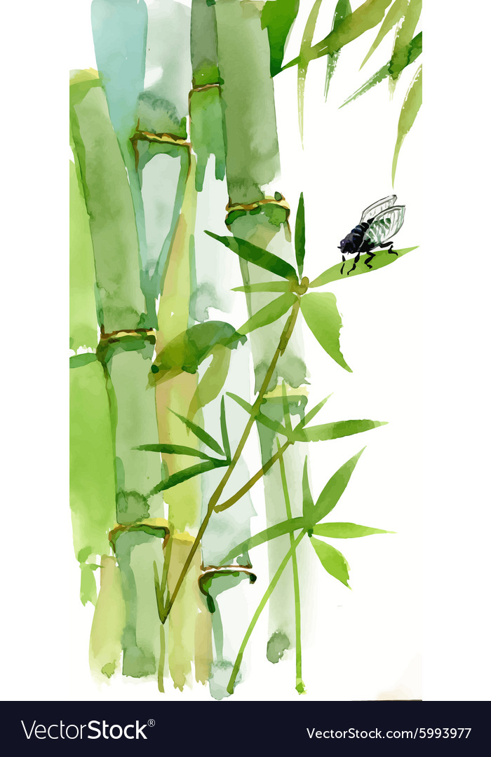 Decorative watercolor bamboo background for your vector
