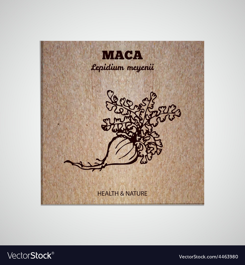 Herbs and spices collection  maca vector
