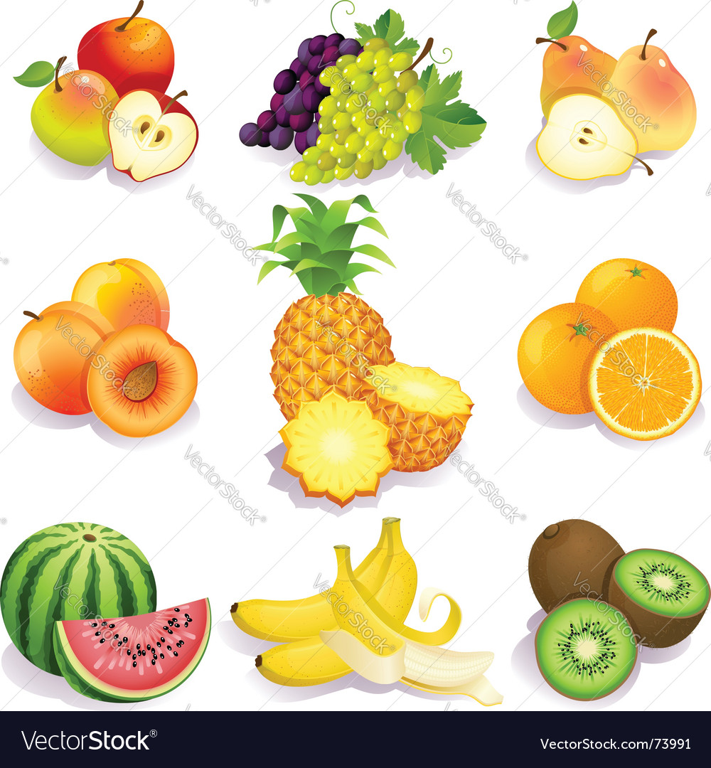 Summer fruit vector