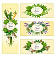 vecor banners of garden spices and herbs vector image vector image