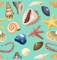 sea shells marine cartoon clam-shell and ocean vector image