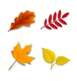 Autumn oak maple ash birch leaves vector image