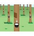Rubber tree jungle in flat style vector image