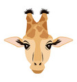 giraffe african animal safari zoo vector image