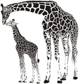Animal family of giraffes vector image