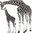 Animal family of giraffes vector image