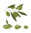 set of white Olives with leafs vector image
