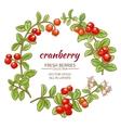 cranberry set vector image