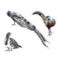 Beautiful birds ink hand drawn vector image