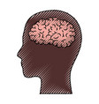 human face brown silhouette with brain inside in vector image