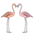 color image of flamingo vector image