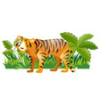 wild tiger in the forest vector image