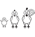 chicken family vector image vector image