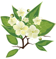 blooming myrtle branch vector image vector image
