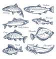 sea fish sketch isolated icons vector image vector image