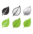 herb leaf icon in many style vector image