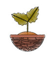 plant in pot vector image