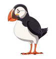 cartoon smiling puffin vector image vector image