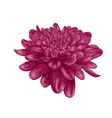 purple dahlia with the effect of a watercolor draw vector image