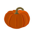 halloween pumpkin on a white background vector image