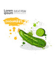 cucumber hand drawn watercolor vegetables on white vector image