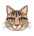 head feline wildlife stripes animal icon vector image
