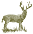 Woodcut Deer vector image