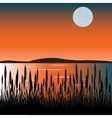 Bulrush on lake vector image