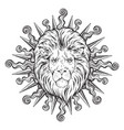 hand drawn lion head in sun rays isolated vector image