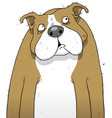 British bulldog cartoon character vector image