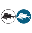 perch fish vector image