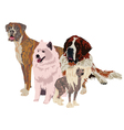group of dogs of different breeds vector image vector image