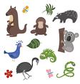 animals of australia vector image