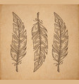 three bird feather isolated on white engraving vector image