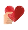 drawing hand with red heart romantic valentines vector image