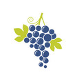 blue grapes natural fruit on white background vector image