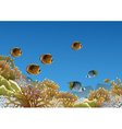 Coral reef with butterfly fishes vector image