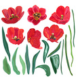 red tulips set vector image vector image