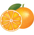 whole orange and half vector image