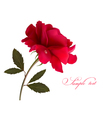 Holiday background with red beautiful rose vector image