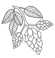 Hops plant black and white images isolated vector image