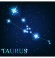the taurus zodiac sign of the beautiful bright vector image vector image